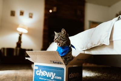 プレゼント箱から飛び出す猫