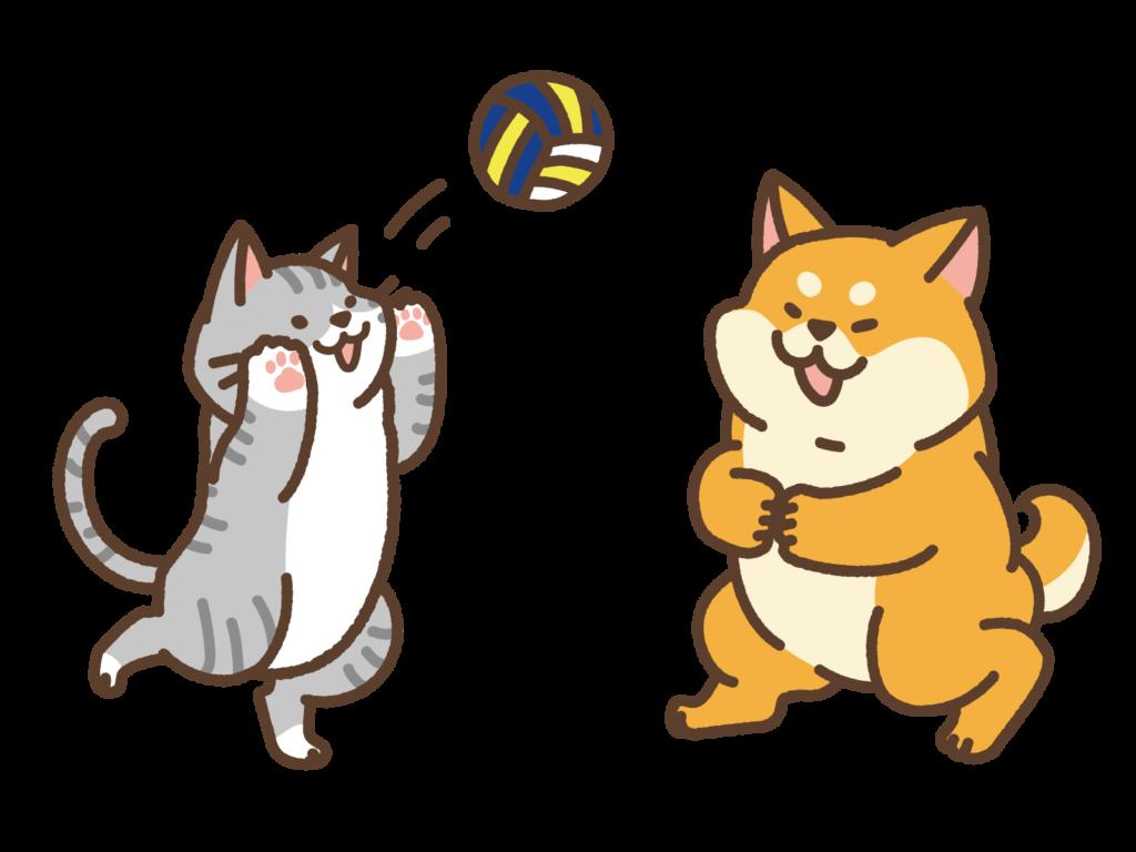 バレーボールをする猫と柴犬